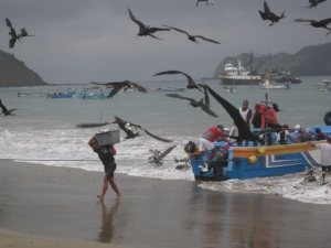 Fishermen arriving with their early morning catch...and the birds trying to get a free meal!